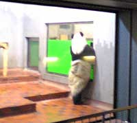 uenozoo_panda1.jpg