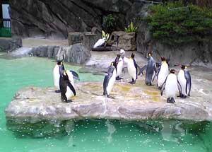 uenozoo_penguin1.jpg